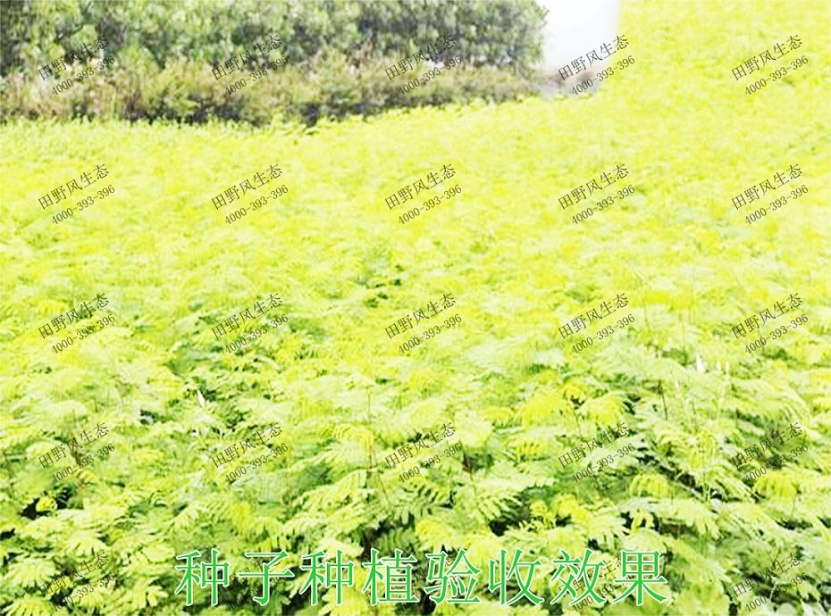 6种子种植验收效果