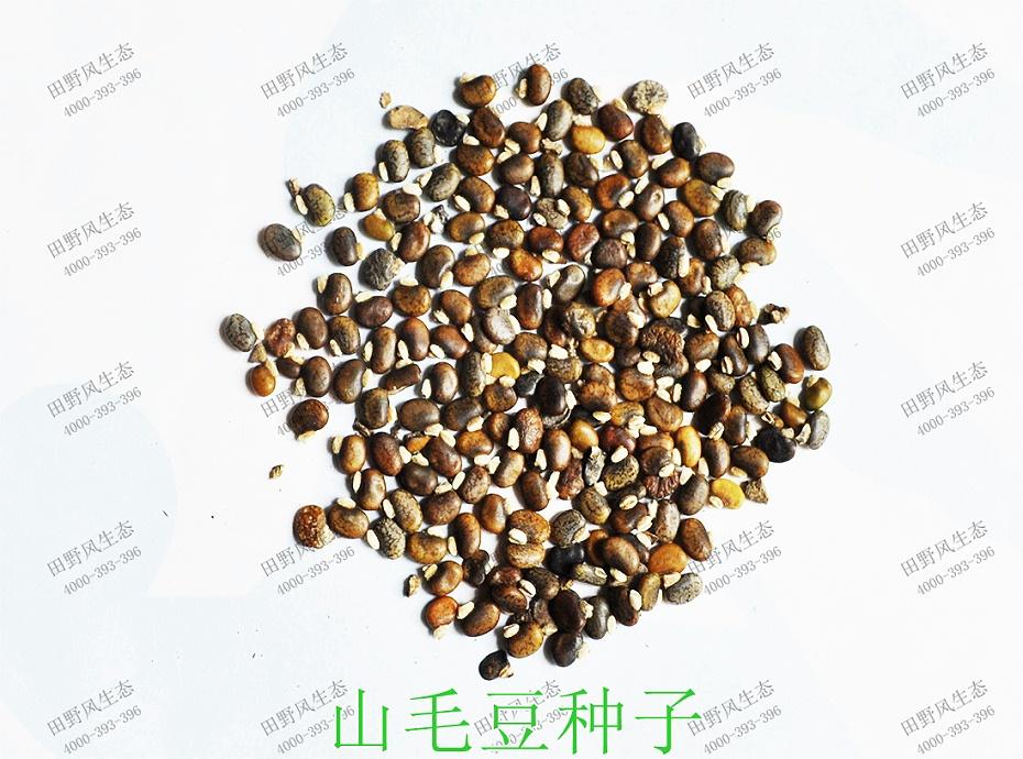1山毛豆种子