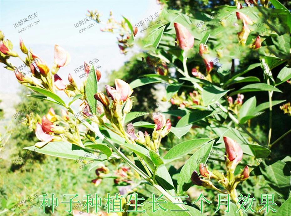 5种子种植生长3个月效果