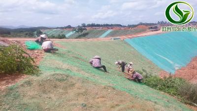 钦州边坡复绿工程现场实况