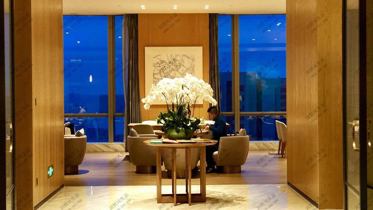 酒店花卉绿植养护,绿化养护