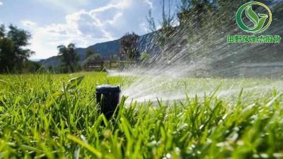 草坪养护   春夏季管理草坪要点