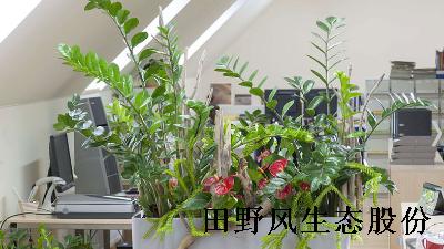 办公室绿植租摆可不是放几盆花那么简单!