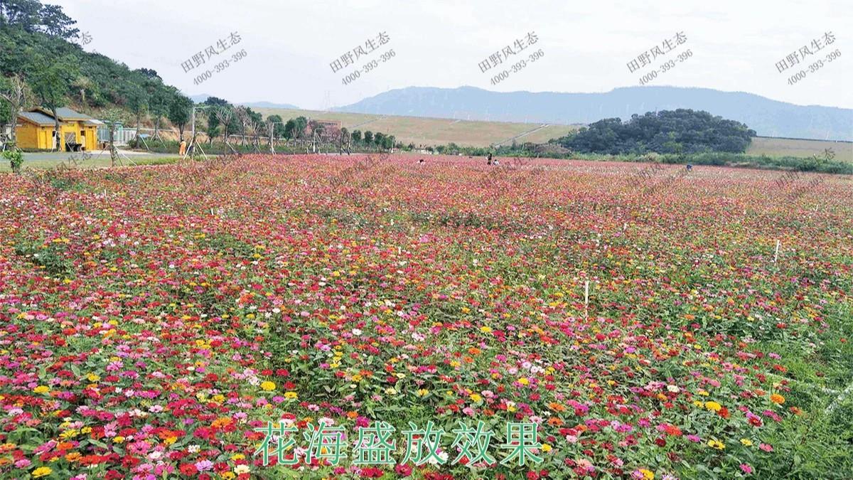 广西梧州思良江休闲农业生态园花海工程