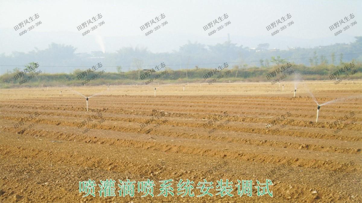 广州番禺农业大观园景观花海