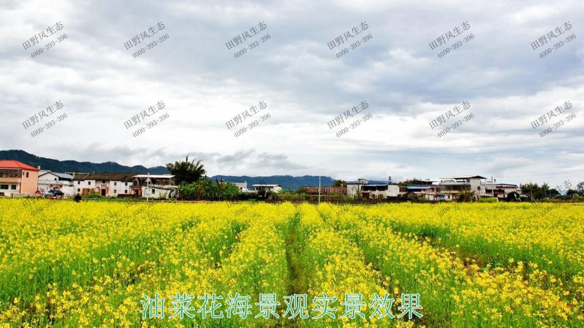 广东梅州美丽乡村工程