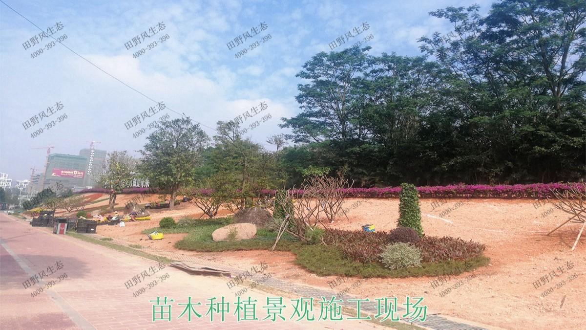 广东河源滨江大道园林景观工程