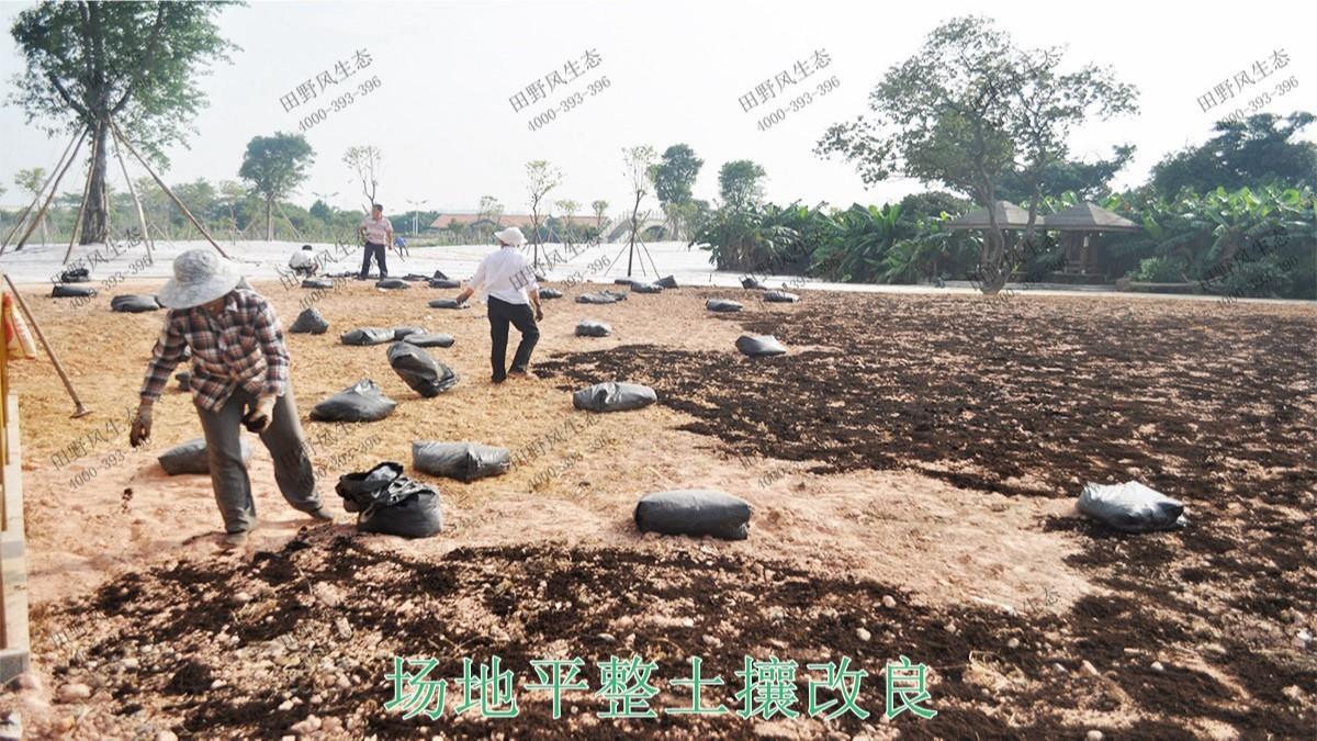 广州海珠湖湿地公园花海工程