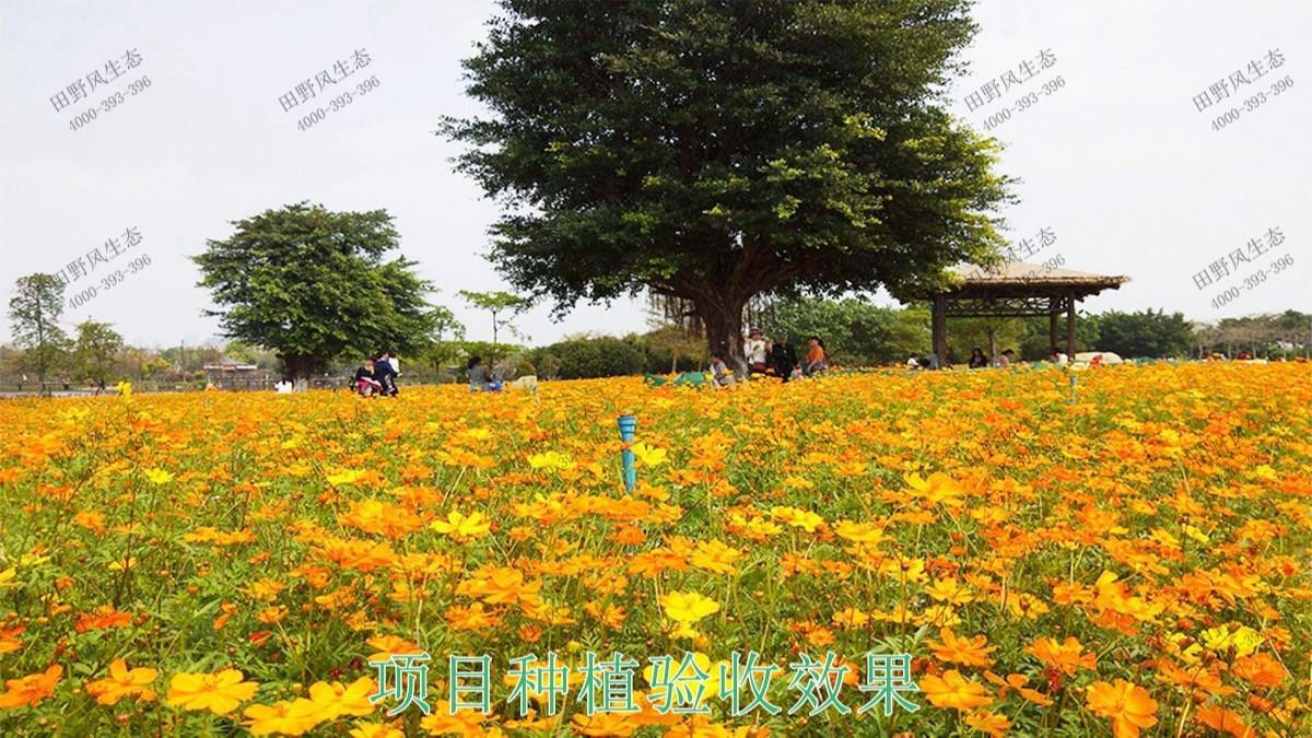 广东丹霞山国家森林公园花海工程
