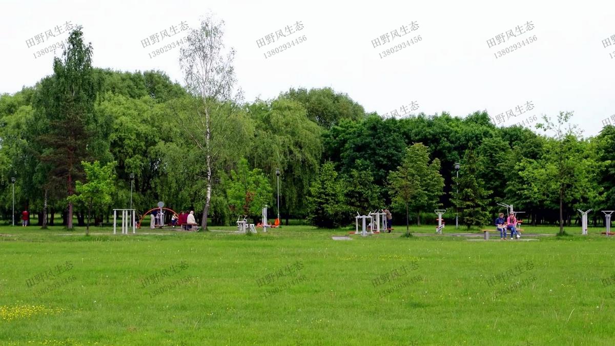 草坪绿化草种种植