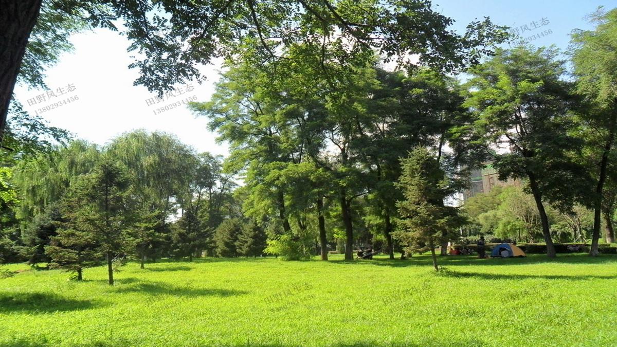 公园草坪绿化草种种植