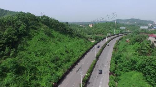 济广高速平远段高速公路边坡复绿工程