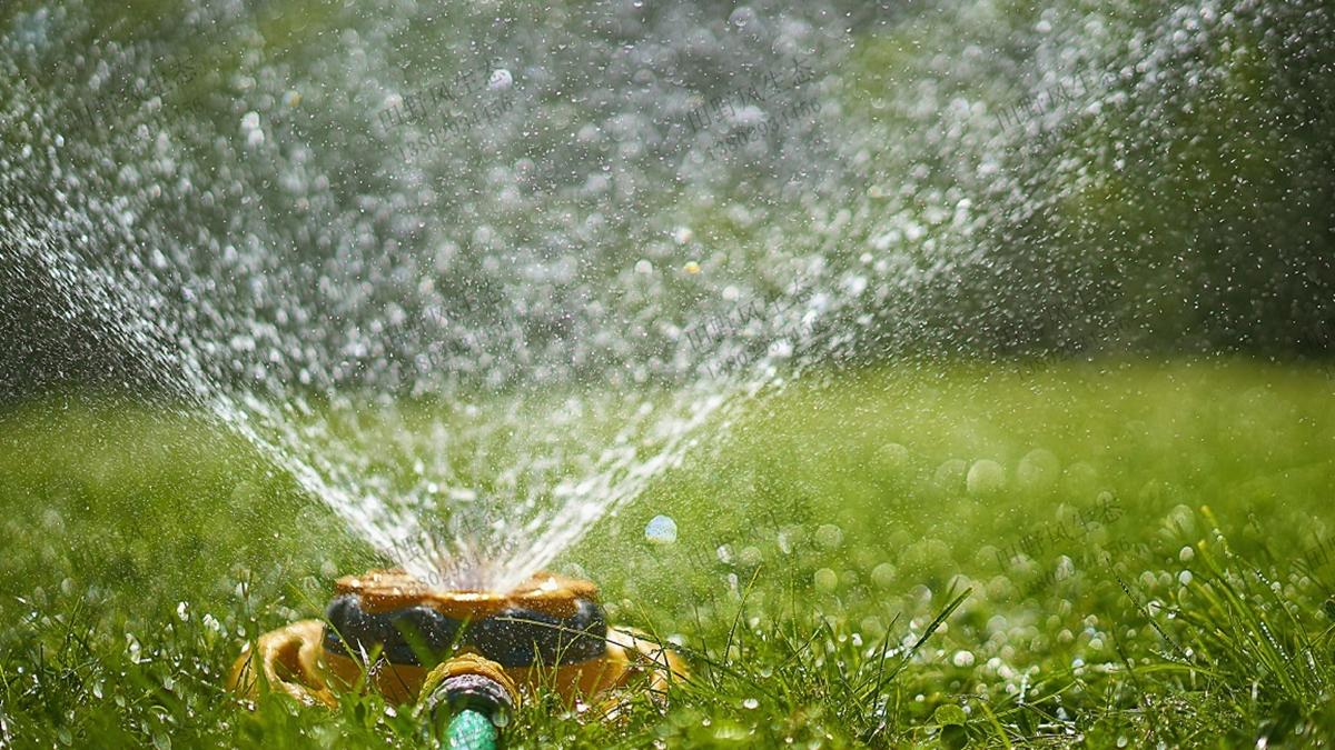 结缕草草坪浇水