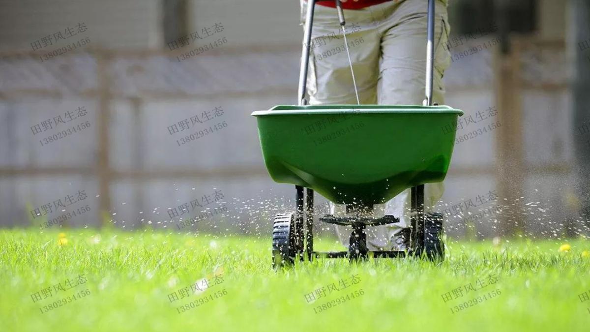结缕草草坪施肥