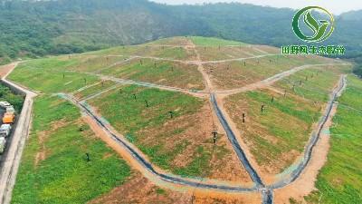 红花坑垃圾填埋场植草复绿效果展示