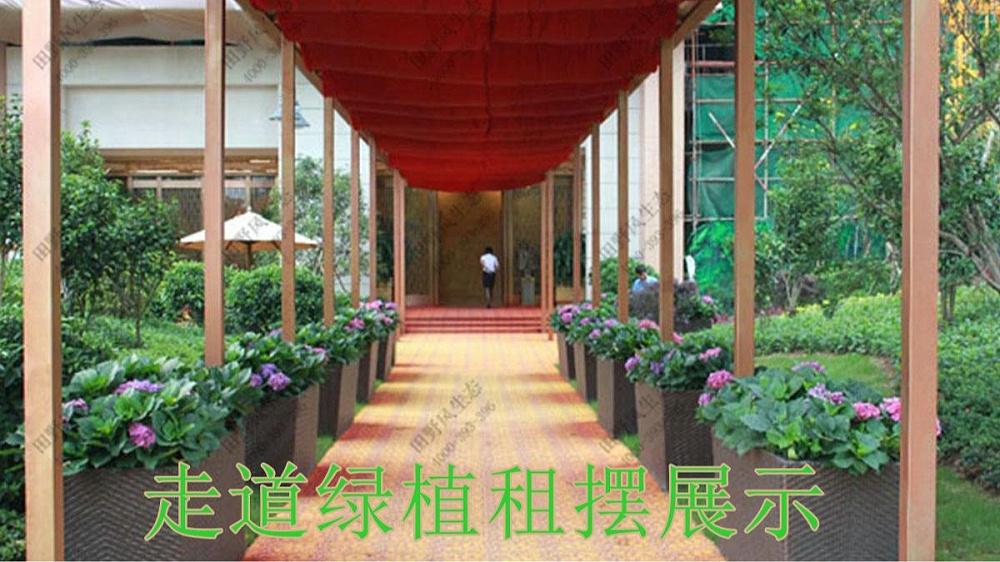 广州珠光御景壹号绿植租赁案例