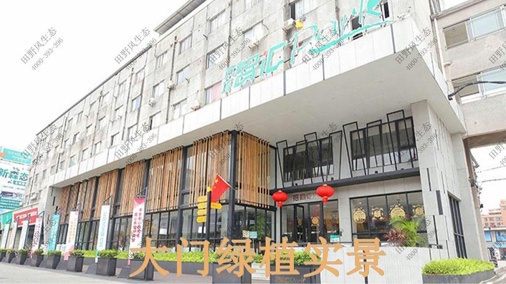 广州西城智汇park植物出租案例