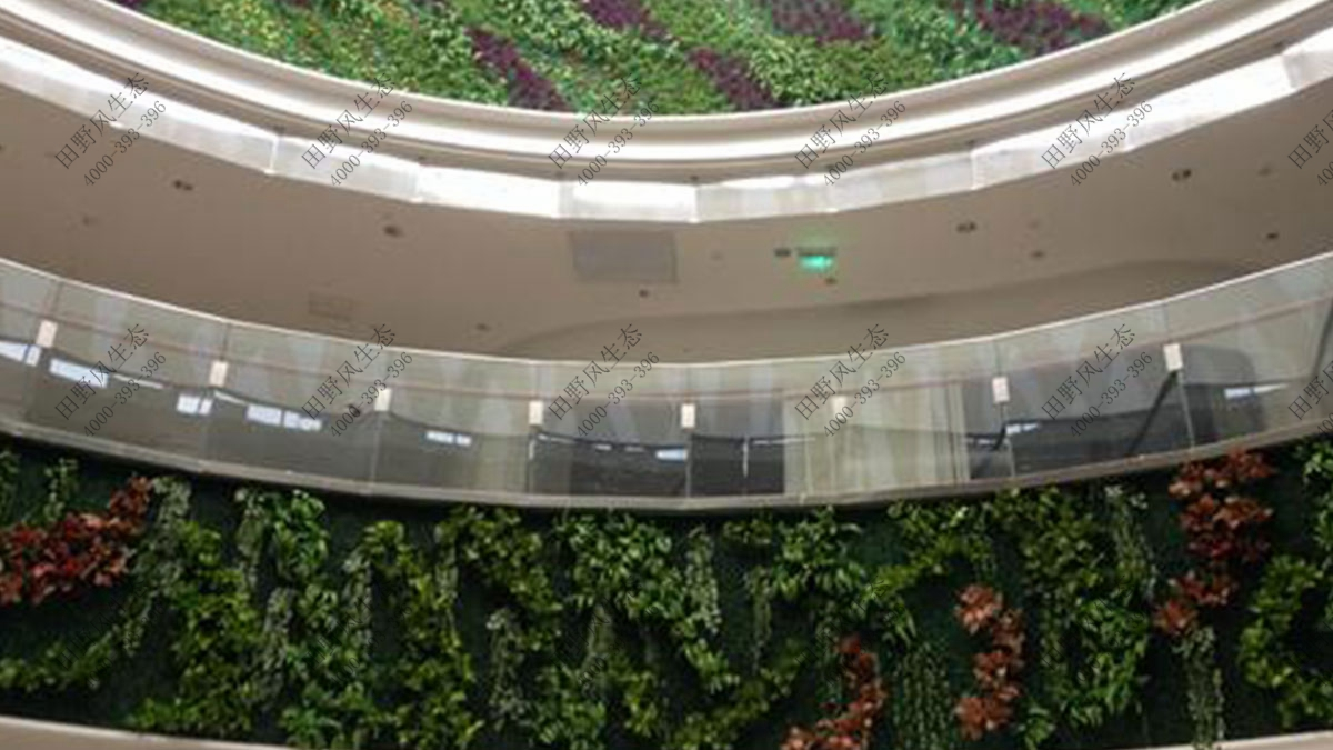 大型商场植物租赁,大型商场植物租摆