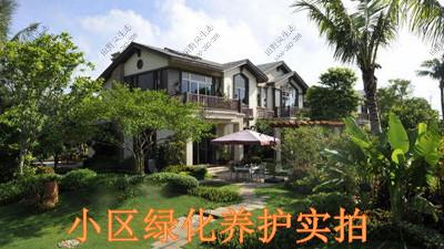 广东碧桂园植物养护案例