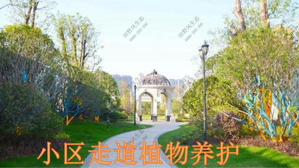 广东奥园草坪养护案例