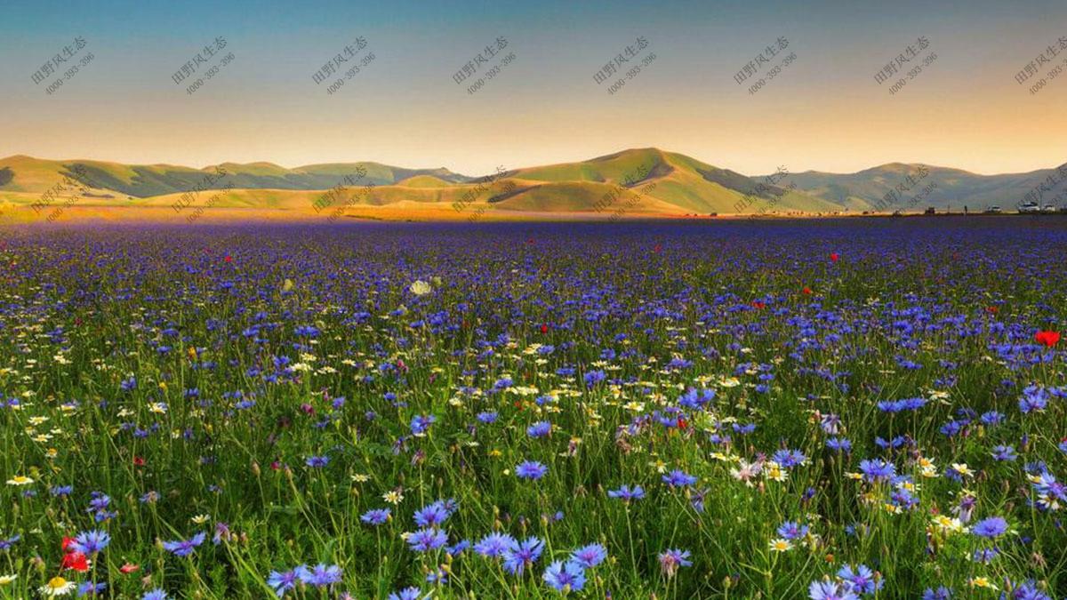 速生一年生花种,花卉种子