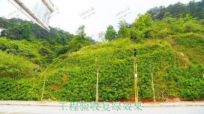 河源江东工业园边坡复绿工程