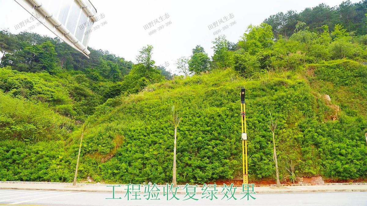 河源江东工业园区边坡生态修复工程