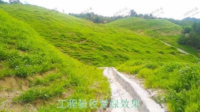 新丰县工业园区复绿工程