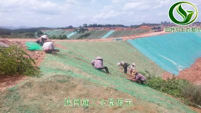 三维土工网边坡植草技术