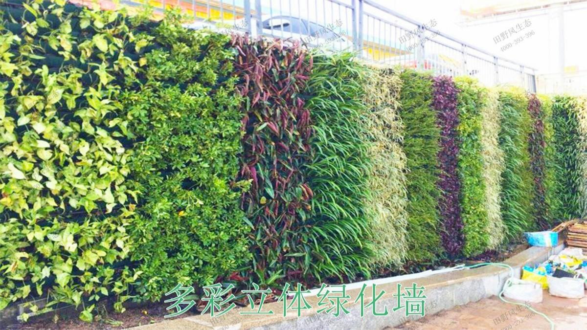 广西南宁市政立体绿化工程