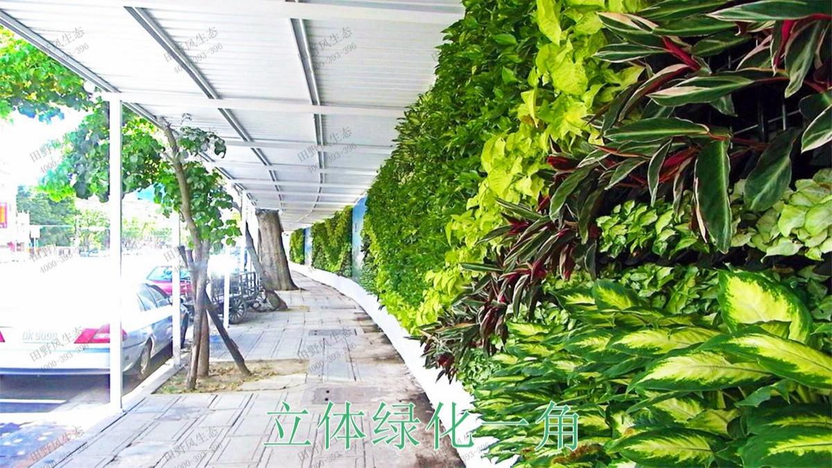 珠海市政立体绿化项目