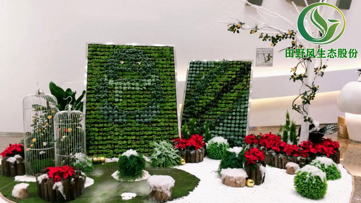 广州绿植租赁,广州绿植出租