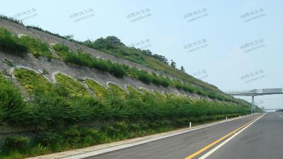 边坡绿化对植物的选择原则,有哪些植物推荐?