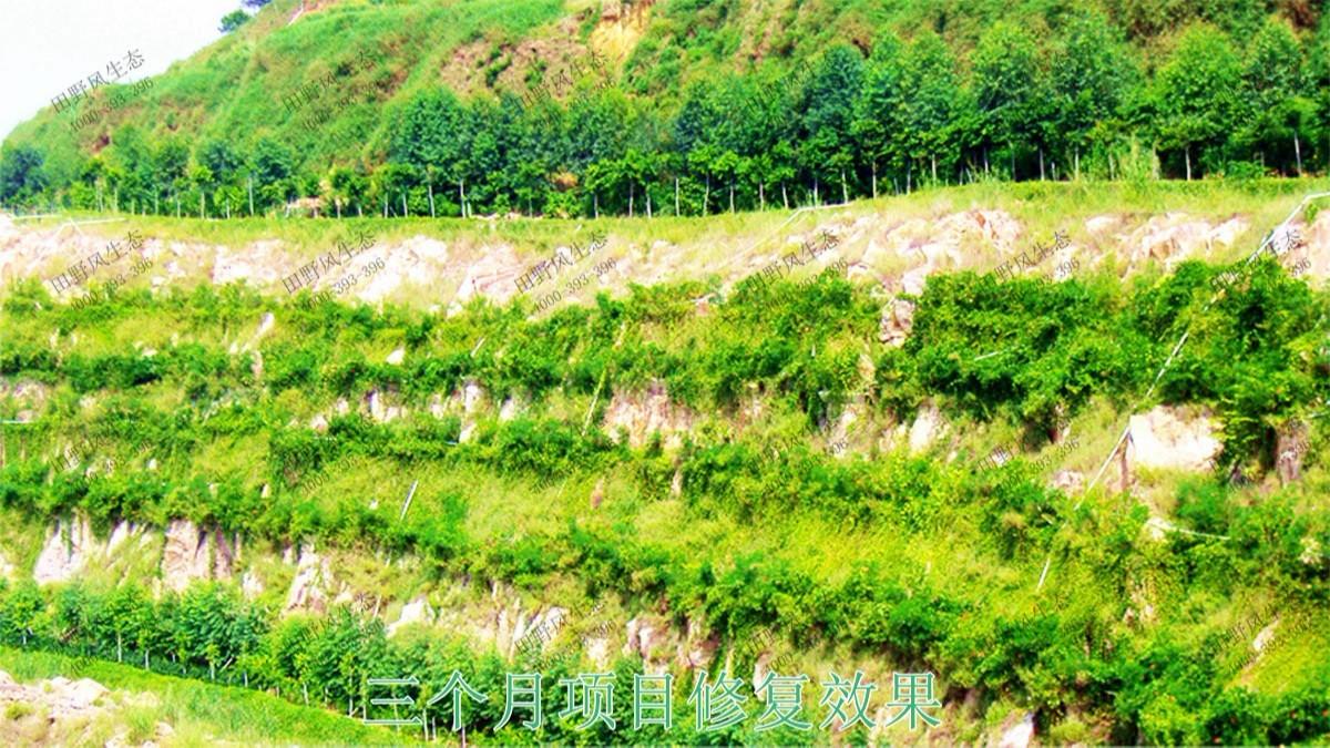福建龙岩铁矿山生态修复工程