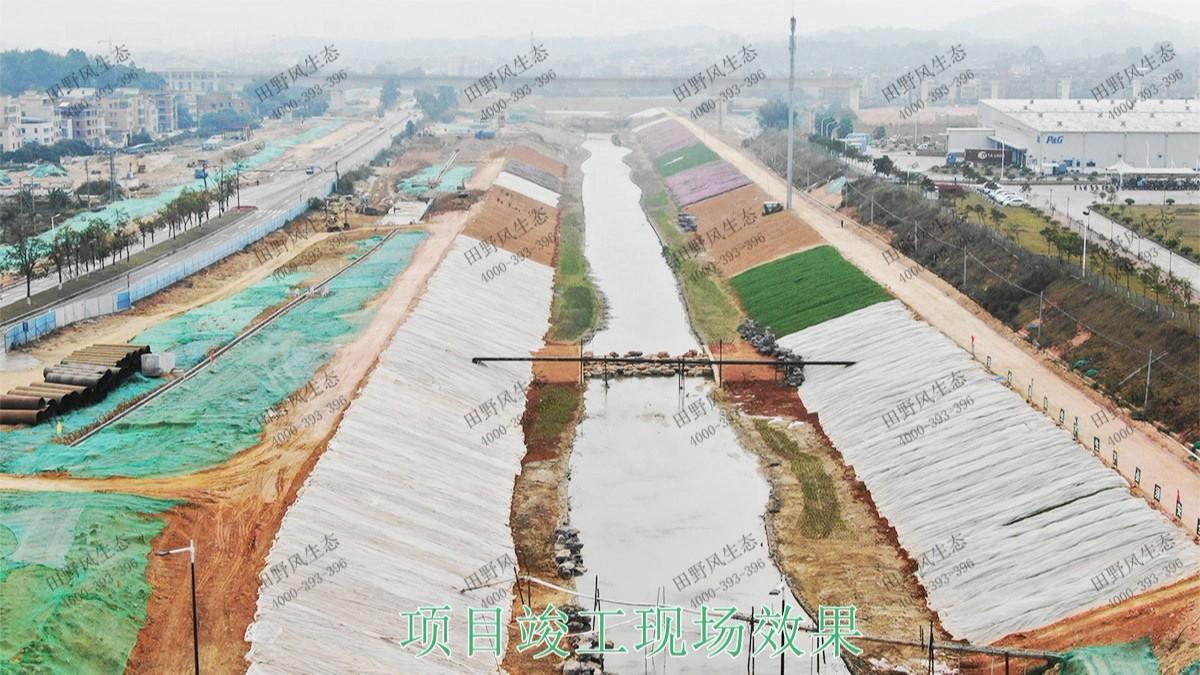 广州黄埔九龙涌河道边坡复绿