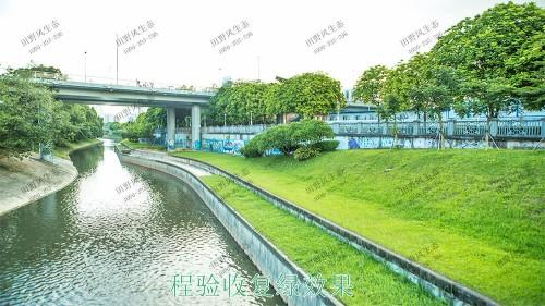 深圳茅洲河生态河道边坡喷草