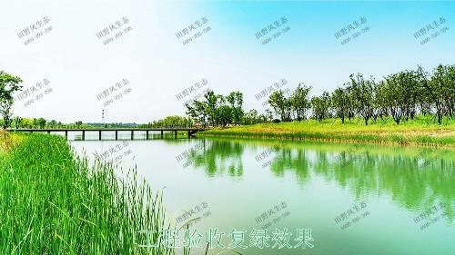 中山翠享湿地公园河道边坡植草
