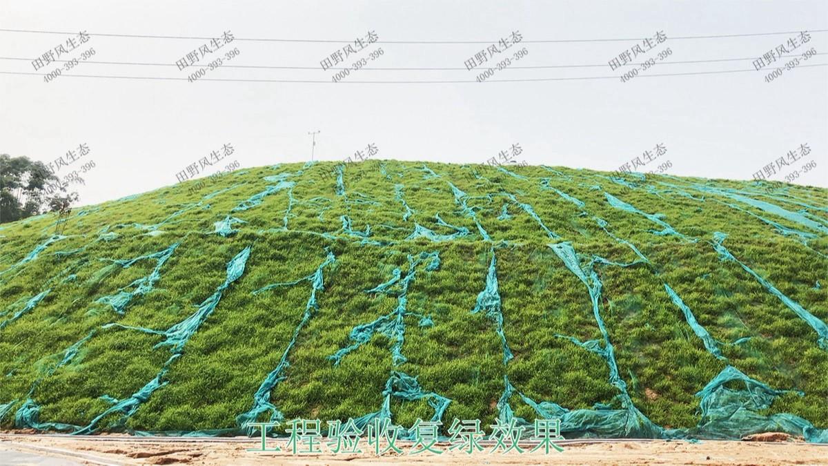 海大集团养猪基地边坡复绿
