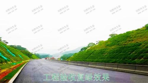 平兴高速五华段公路边坡挂网复绿