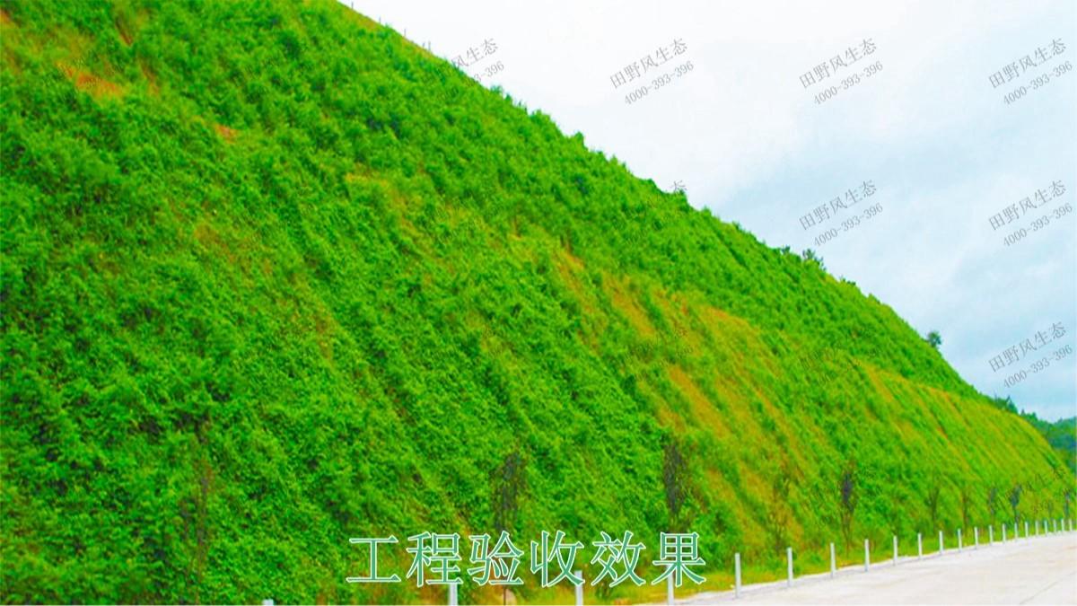 清连高速清远段高速公路边坡复绿工程