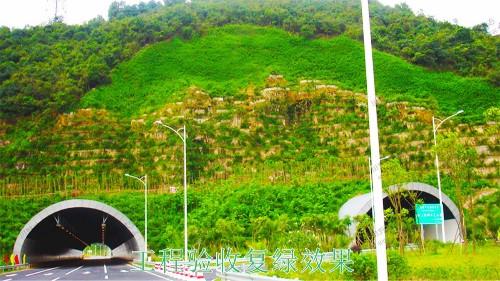 广珠高速中山段公路边坡绿化高速工程