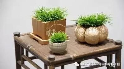中式园林绿化-古典菖蒲