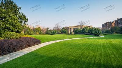 要想草坪长得好,水肥管理是重点