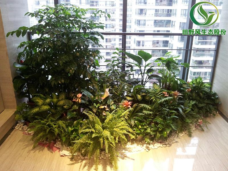 办公室绿植租摆,绿植租赁