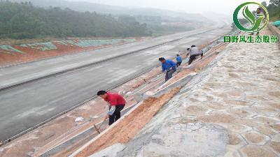 高速公路绿化,有哪些方法与窍门呢?