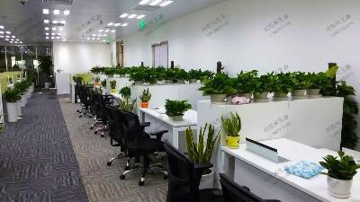 国泰君安证券股份有限公司植物租摆案例
