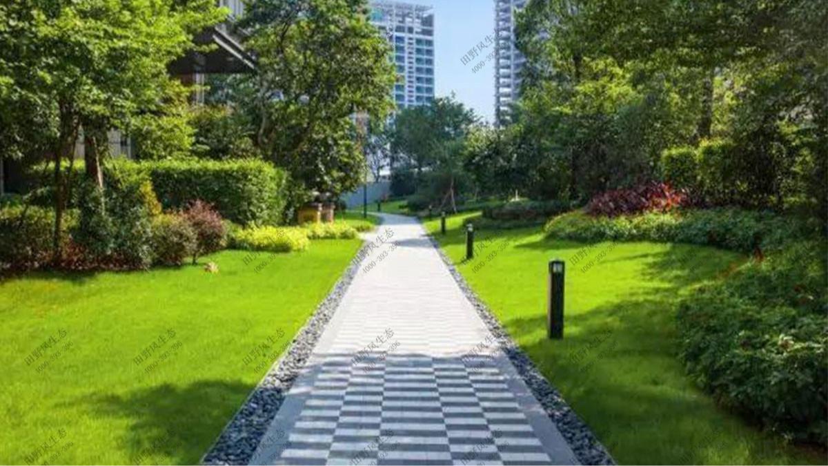 广州保利天悦小区草坪养护案例