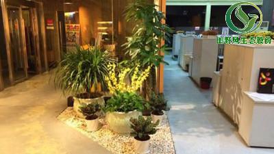 影响绿色植物租赁价格的因素有哪些?