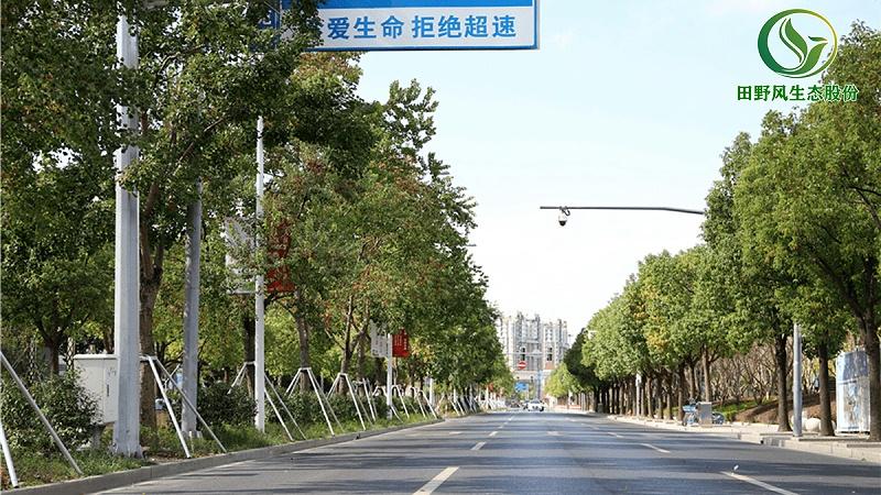 公路绿化,高速公路绿化