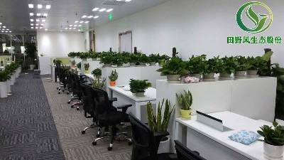 广州绿植租赁,田野风企业深获广州东泰化工客户信赖!